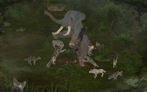 Wild Animals Online Apk